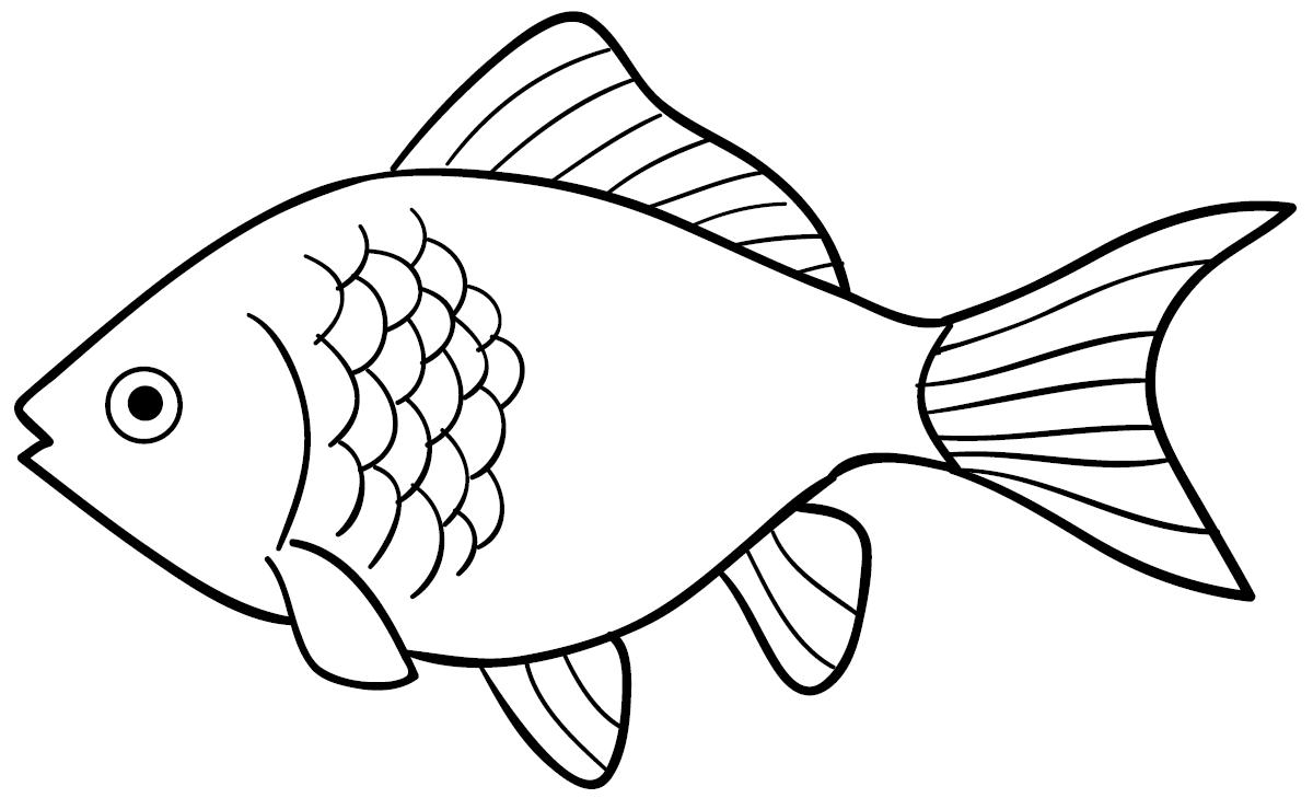 Cara Menggambar Ikan Kakap