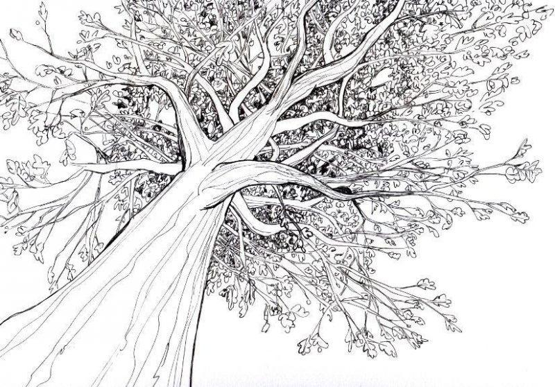Gambar Ranting Pohon