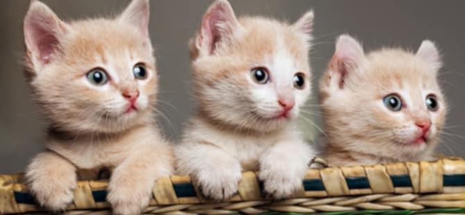 Gambar Kucing Imut godean.web.id