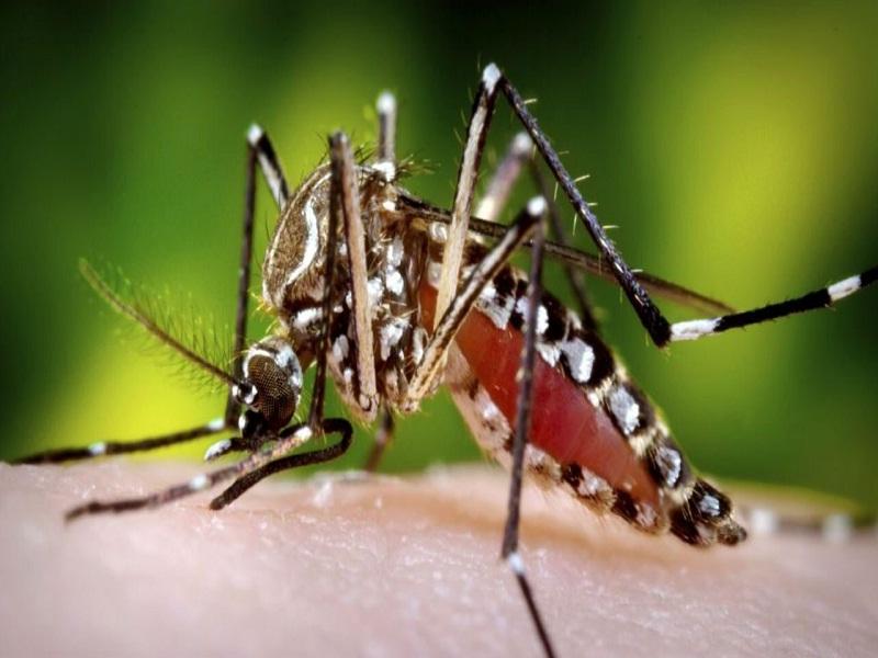 23 cara mengusir nyamuk ampuh dan