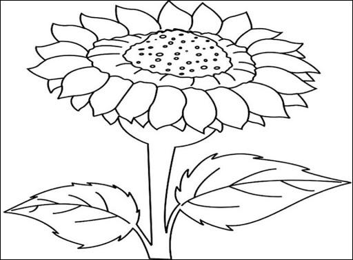 Gambar Sketsa Bunga Indah Sakura Mawar Melatu Terbaru Terlengkap