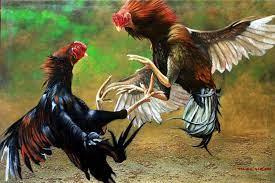Jenis-Jenis Ayam Bangkok